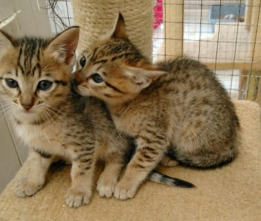 We have three kittens available for re-homing