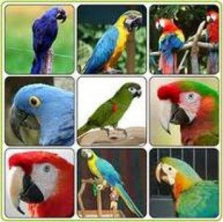 macaw parrots, cockatoos, Grey parrots, Amazons ,falcons, ostriches