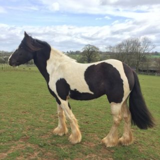 Healthy Horses Available For Sale