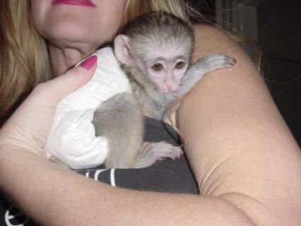 Wonderful male and female monkeys