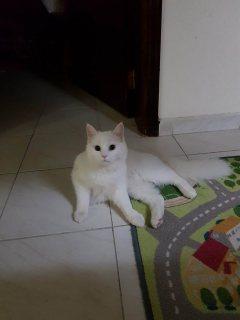 قطة جميلة للتبني