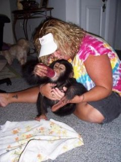 طفل الشمبانزي للبيع