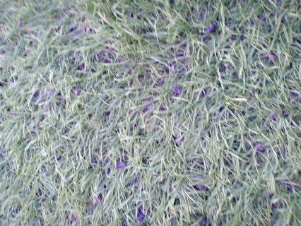 تنظيف السجاد الكنب مكافحة الحشرات