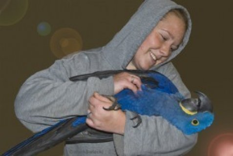 صور Adorable Talking Hyacinth Macaw Parrots for Sale1 1
