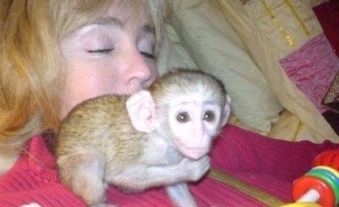 --Capuchin monkey babies