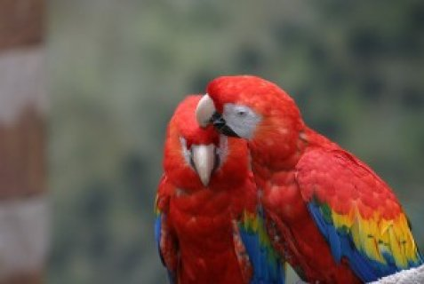 Macaw speaking parrots and fertile eggs available for adoption