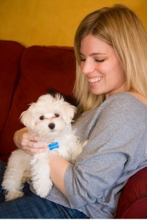 Wow Wow Teacup Maltese puppies for adoption
