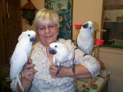 Cuties Cockatoos Parrots For Sale
