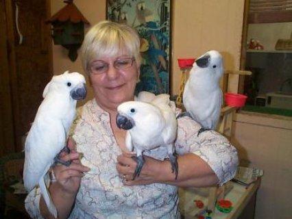 Super talker pair Of Toucan Parrots For sale