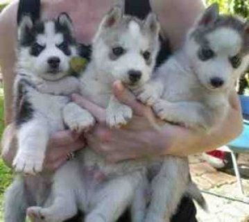 cute adorable puppies for adoption