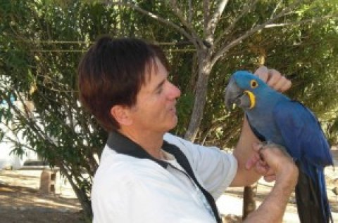 hyacinth macaws proven pair for sale
