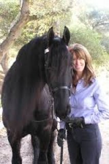 صور Lovely Friesian Male Horse for Sale 1