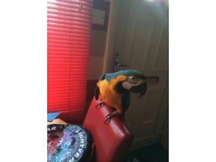 Blue and Gold Macaw Parrot