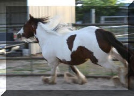 Strong and Bold Horses for Save Riding