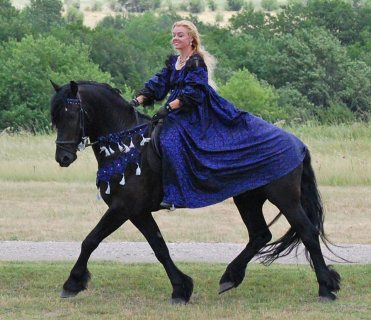 صور Available Friesian Horse Available For Rehoming 1