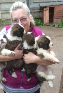 Healthy and Cute Saint bernard  Puppies Now Available