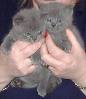 This little kittens know the way right into your heart!