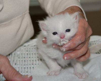 This adorable babies are now ready to move into any new good hom