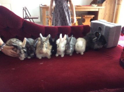 Rabbits  ready for adoption