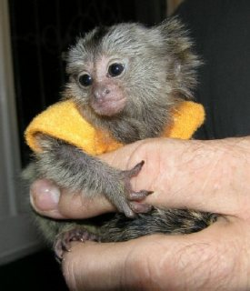 I need a new home for my marmosets.
