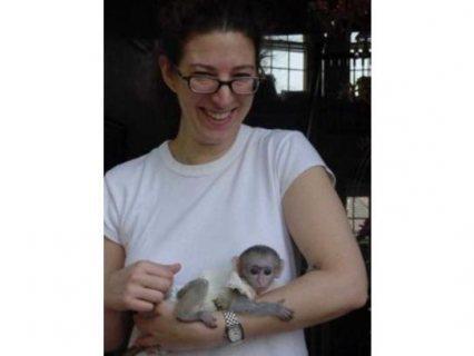 Good looking Capuchin Monkeys for sale