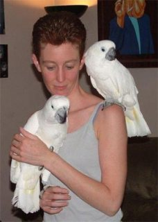 Good looking Cockatoo birds available.
