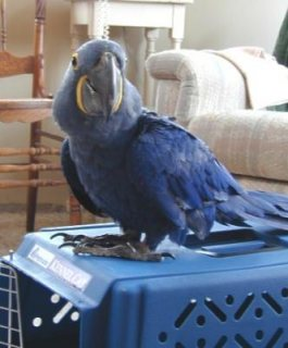 Beautiful Macaw and Parrot birds for Rehoming for sale
