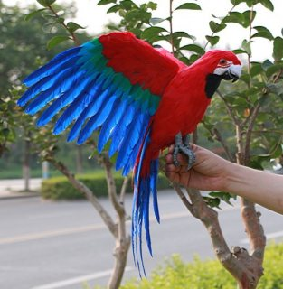 صور Beautiful Scarlet Macaw Parrots For Sale 1