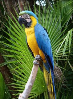 Home Raised Macaws parrots For Sale