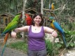 Parrots and Fertile Egss for Sale