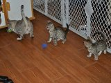 Well Tamed White Tiger Cubs, cheetah Cubs, panther Babies, lion Cubs