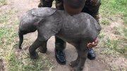 Beautifully train baby Elephants for sale.