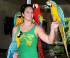 Talking Macaw Parrots For Pet Lovers