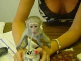 ($350.00) Capuchin monkey for sale