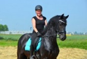 7 Years Old Terrific Moving Gelding For Sale