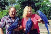 Talking Female Hyacinth Macaw Parrot